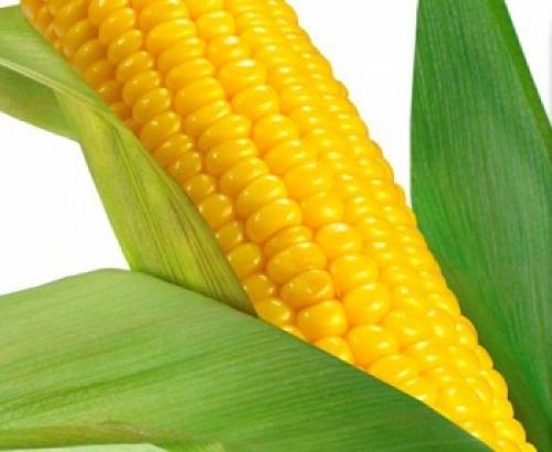 Подушка Кукуруза в перкале