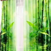 Фотошторы 3д изображений Заросли бамбука